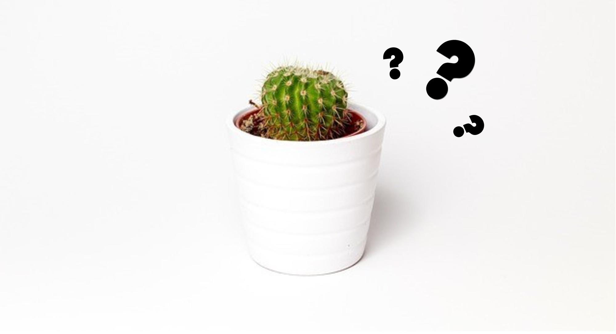 Decoración minimalista jarrón